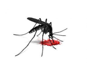 Dengue fever Crack + Virus Outbreak in Children {Latest} 2020